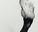 SWAN'S LEG