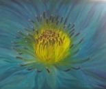 Blue soul flower