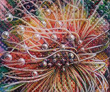 """ Sea anemone"""