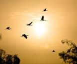 birds 3