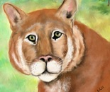 Cougar  (pastel, digitally retouched.)