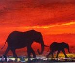 Elephant Night Trails