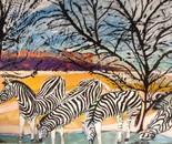 zebrages