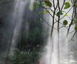 Sunbeams in the Mist