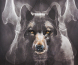 Animal in my Bones 1_Wolf