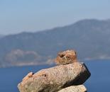 Stones in Corsica 5