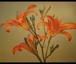 ,,Lilies''-oil on canvas-81x60cm