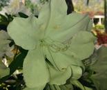 DANCING YELLOW FLOWER