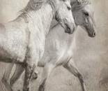Majestic Stallions
