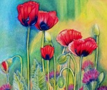 Red Poppies And Thistles