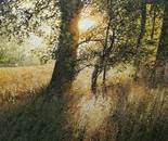 late-summer-afternoon-90x60cm