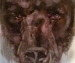 Brown Bear #2