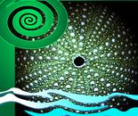 Sea Urchin - Kina