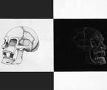 Reverse Skulls