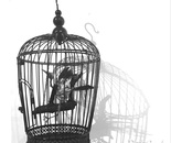 Bird skeleton perched in  a cage
