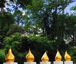 Golden Pears 2015