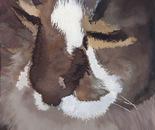 Figaro The Cat, 41.5x59cm