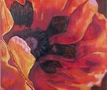 Red Poppy 2, 76x61cm
