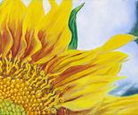 Sunflower 1, 35.5x25.5cm