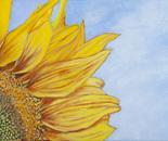 Sunflower 2, 35.5x25.5cm