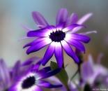 Purple Luv