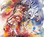 Zebra Stallion Fight