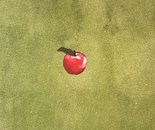 """""""Forbidden apple"""""""