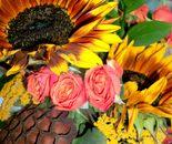 9/19/2015, Gaithersburg, MD USA