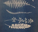 cyanotype ferns leaves