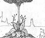 The Philosophical Tree