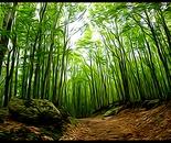 nel bosco magico