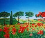 LG 0068 - Toscana Campo di papaveri - olio su tela - cm. 60x40