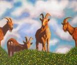 LG 0246 - Le capre di Montecristo - olio su tavola - cm. 56,5x26.5