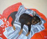 LG 0260 - Sonny il Pinscher Toy - olio su tela . cm. 40x30