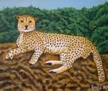 LG 0289 - Il ghepardo - olio su tela - cm. 24x18