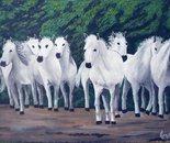 LG 0297 - Cavalli bianchi di Camargue - olio su tela - cm. 30,5x18,5