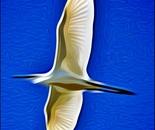 egret paint