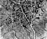 5282-Trees.  Mingle
