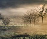 Mattino nebbioso in Toscana
