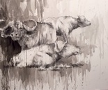 Cape Buffalo. Acrylic and charcoal on water color board. 18x28