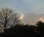 Morning Light 6