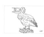Bird(Pelican)