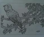 Bird(Love Bird)