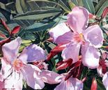 Flora lFanfare