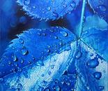 Rhapsody in Blue Rain