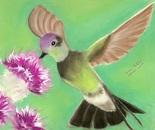 Hummingbird retouched