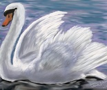 Swan retouched