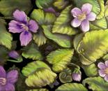 violets retouched