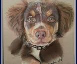 Timber, a street dog