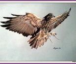 Chili eagle